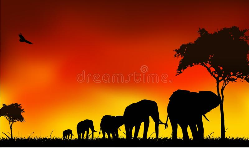 Silhouette Elephants Trip Stock Images