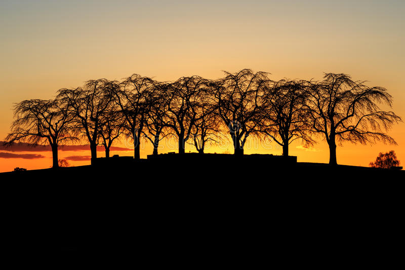 Silhouette of Elm Grove at Woodland Cemetery in Stockholm, Sweden during golden sunset stock photos