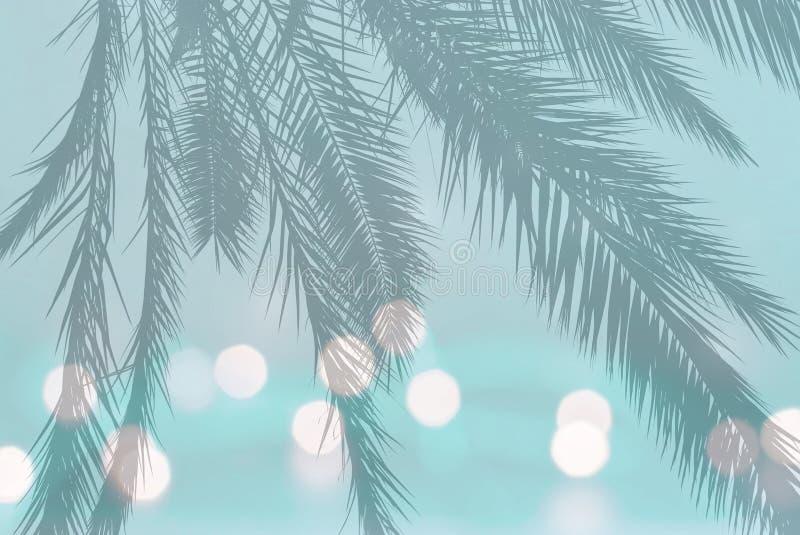 Silhouette en feuille de palmier sur les lumières troubles de fête sur la turquoise molle de sarcelle d'hiver images libres de droits