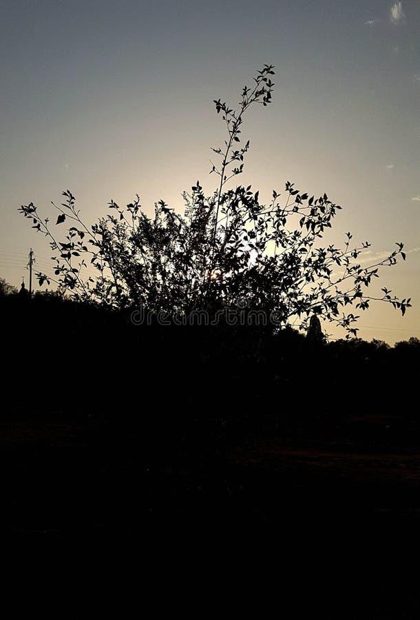 Silhouette et ciel contrastés d'arbre image libre de droits