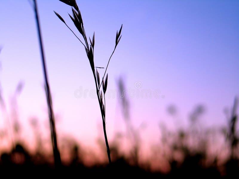 Silhouette för 3 växt