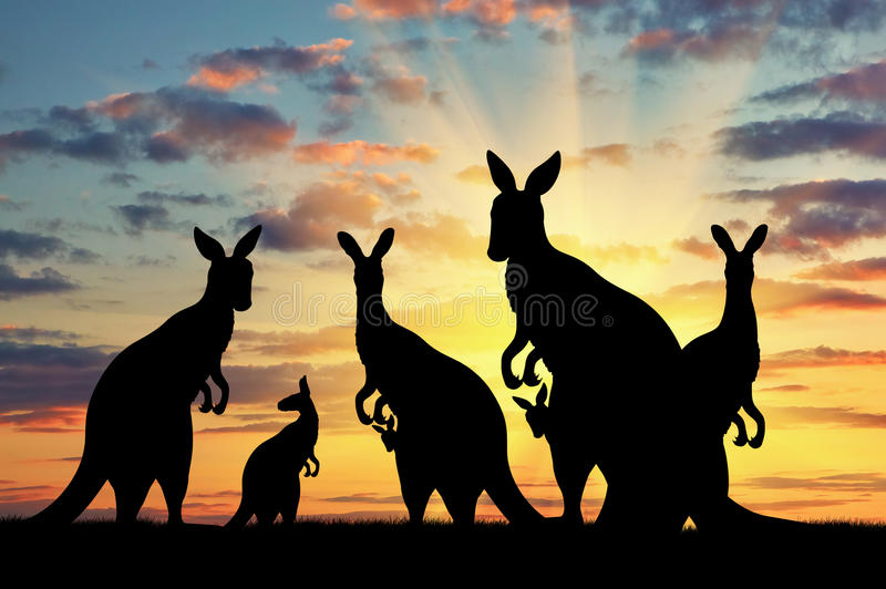 Silhouette family of kangaroos. On the background of a beautiful sunset royalty free stock image
