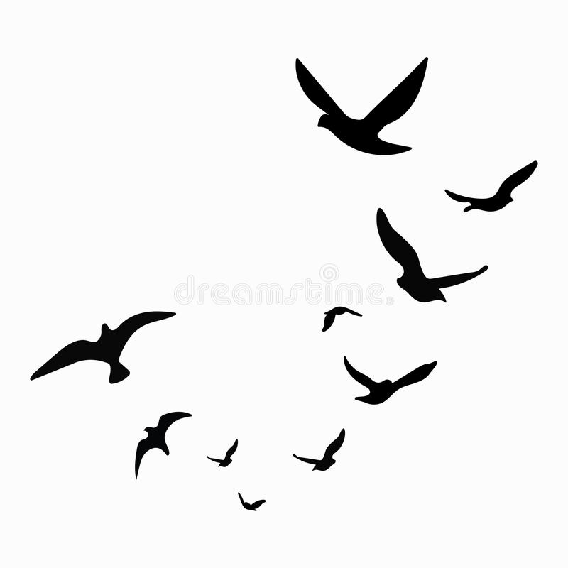Silhouette Of A Flock Of Birds Black Contours Of Flying