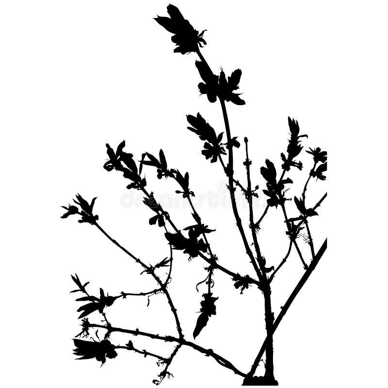 Silhouette florale 09 illustration libre de droits