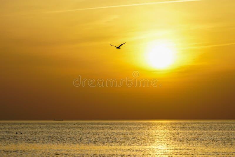 Silhouette of flying bird on sea sunset stock photo