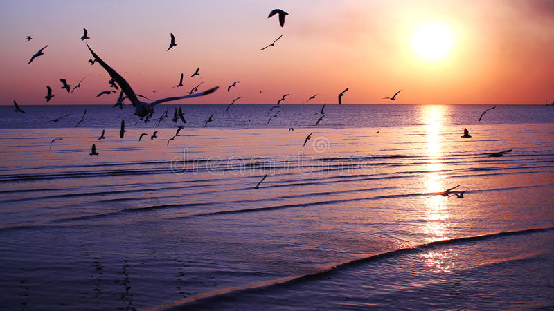 Silhouette flying birds. Seagulls are flying in the sky while the sun is rising.Bangpoo ,Thailand royalty free stock image