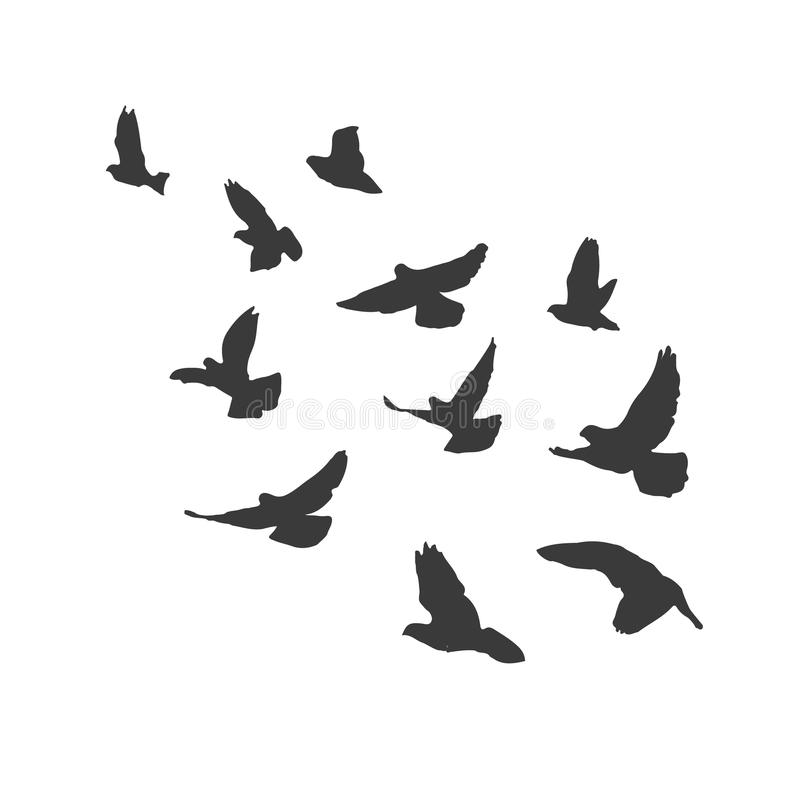 Silhouette Flying Birds On White Background. Pigeons Fly