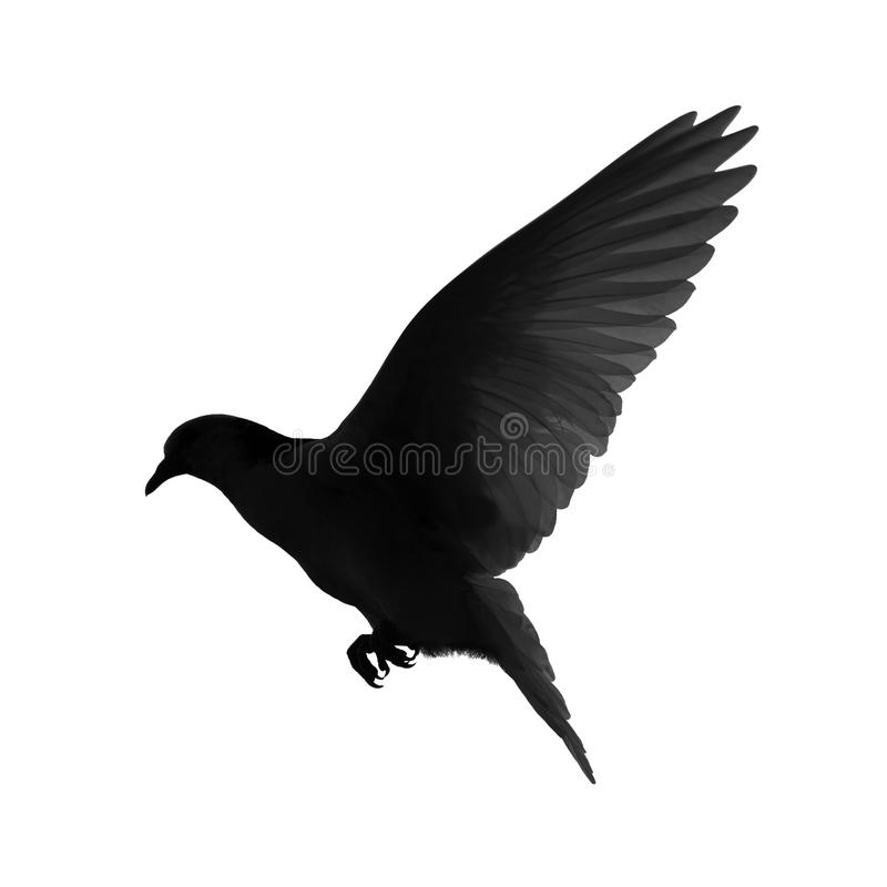 Silhouette of a flying dove stock illustration