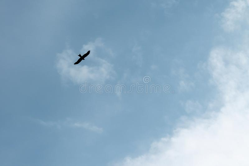 Silhouette of a flying eagle stock image