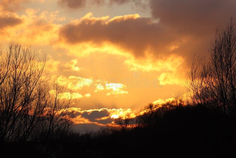 Silhouette foncée des arbres et des cousins dans la perspective d'un coucher du soleil orange Plis de nature de soirée à une hume photo stock