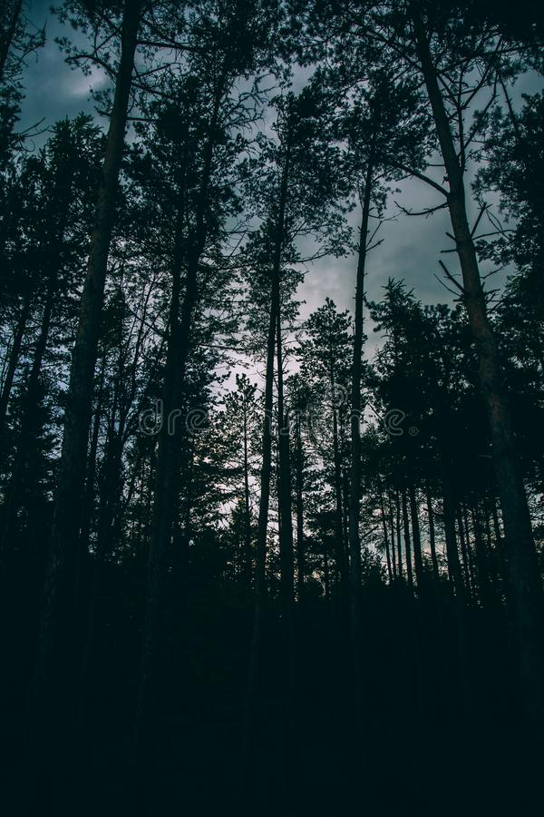 Silhouette of a forest and tall trees with a cloudy sky in the background in a vertical shot. A silhouette of a forest and tall trees with a cloudy sky in the stock photos