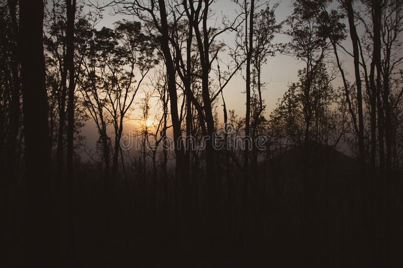 Silhouette,Forest trees. nature green wood warm tone of summer season with sunset and mountain background in Thailand royalty free stock photo
