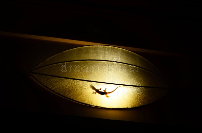 Silhouette of a gecko hiding in a paper-lamp. royalty free stock photography