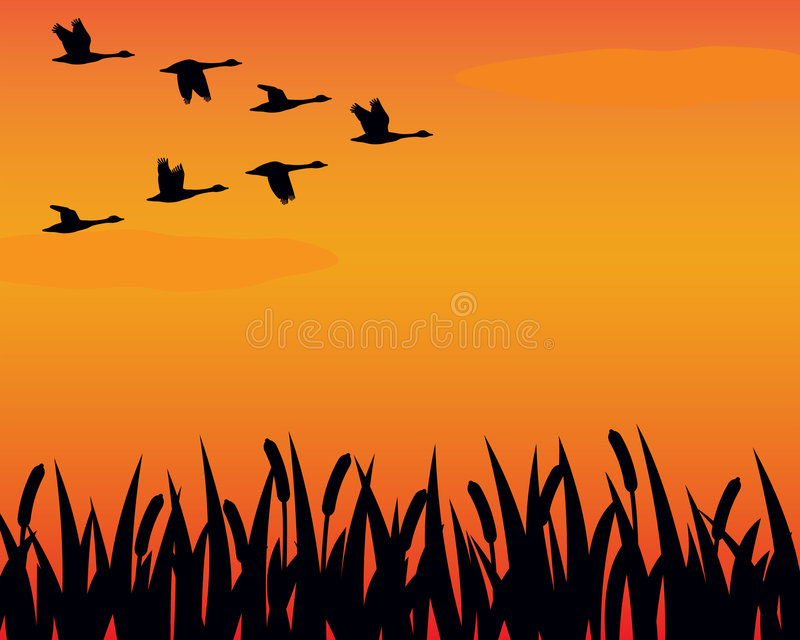 Silhouette geese and marsh stock illustration