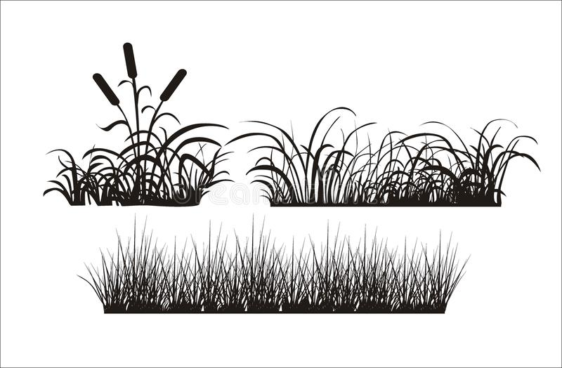 Silhouette of grass royalty free stock image