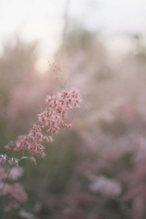 Silhouette of grass flower with sunset background, Color clouded style. stock photo