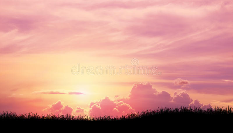 Silhouette grass in Pink purple sky cloud background royalty free stock image