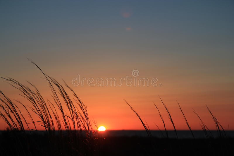Silhouette Of Grass With Twilight Background Free Public Domain Cc0 Image