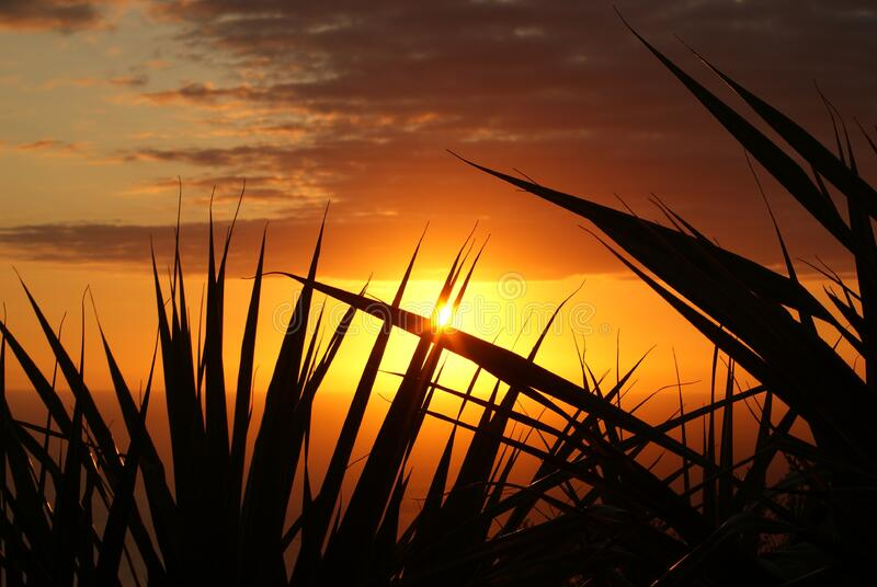 Silhouette Of Grass Under The Sepia Sky Free Public Domain Cc0 Image