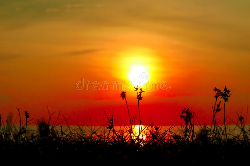 silhouette grass and weed on beach blurred sunset sky stock photos