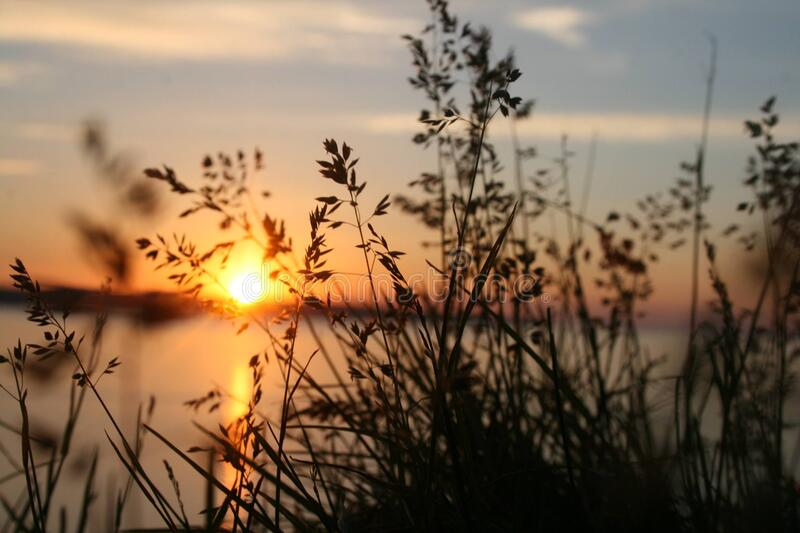 Silhouette Of Grasses Against The Light Of Setting Sun Free Public Domain Cc0 Image