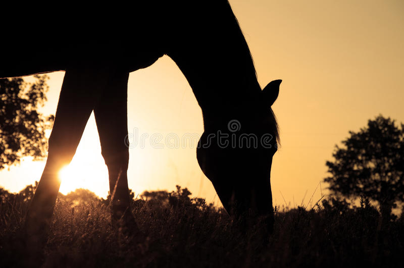 Silhouette Of A Grazing Arabian Horse Royalty Free Stock Photos