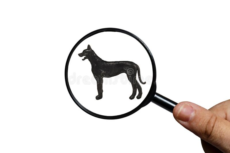 Silhouette of Great Dane on white background stock photos