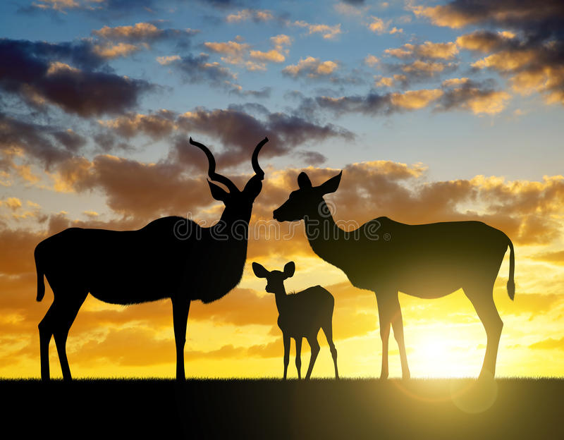 Silhouette Greater kudu stock photography