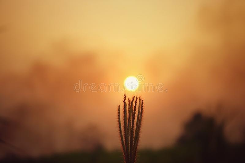 Silhouette of green leaf on sky sunset on blurred background with warm shades of the setting The sun.  royalty free stock images