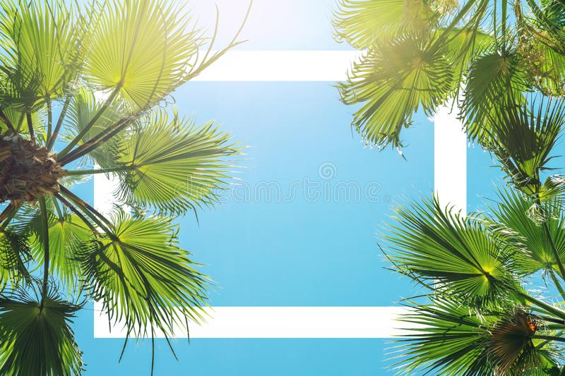Silhouette of green tropical palm tree leaves with clear blue sky on backgroung at sunset or sunrise time. White frame for text. stock photo