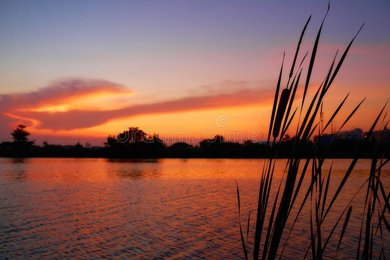 Silhouette gress nature sunset river. Silhouette nature sunset river. gress is foreground stock photography