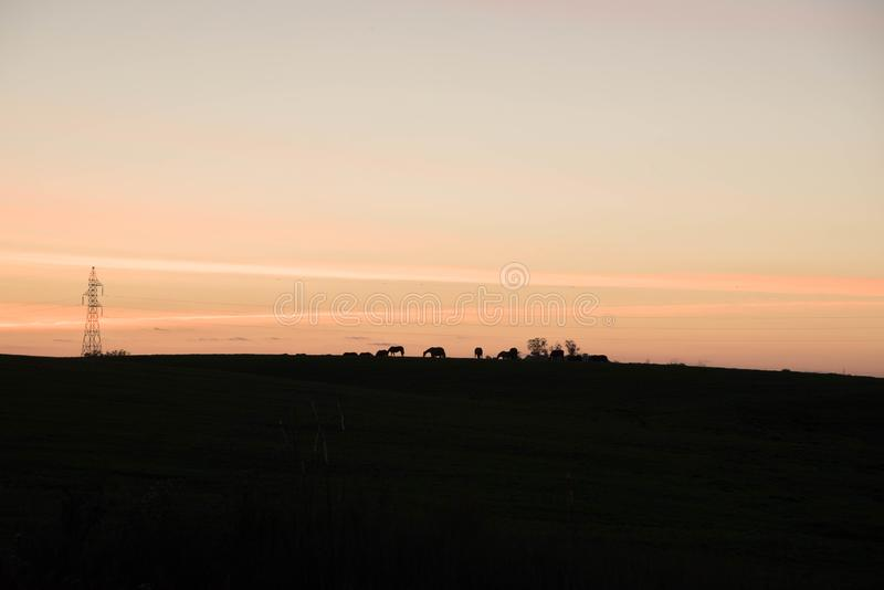 Silhouette of horses in late afternoon 01 royalty free stock image