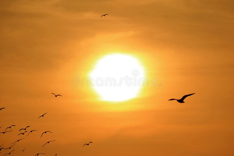 Silhouette of Group of Seagulls Flying Against the Bright Rising Sun. Beauty in Nature royalty free stock photos