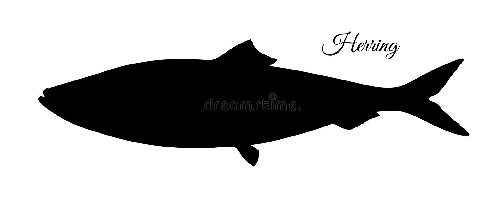 Silhouette of herring. Hand drawn vector illustration of fish isolated on white background vector illustration