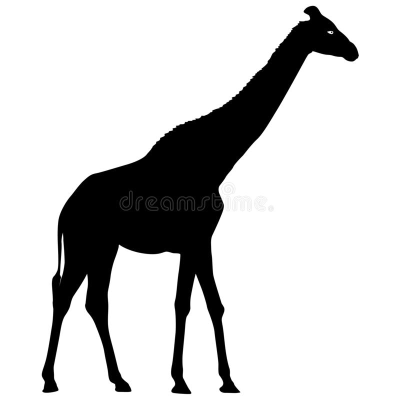 Silhouette high African giraffe on a white background royalty free illustration