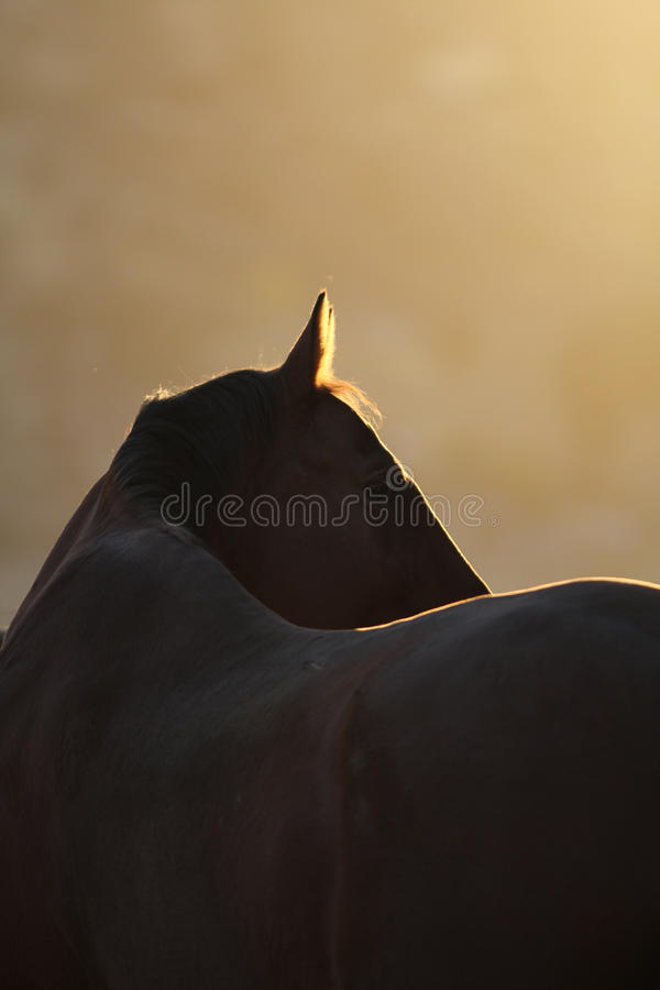Download A silhouette of a horse. stock image. Image of elegant - 54571399