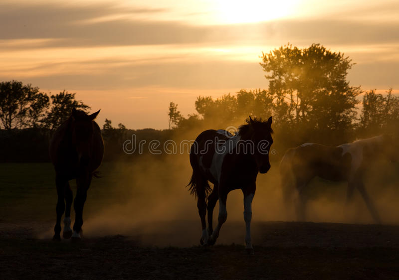 Silhouette horses stock image