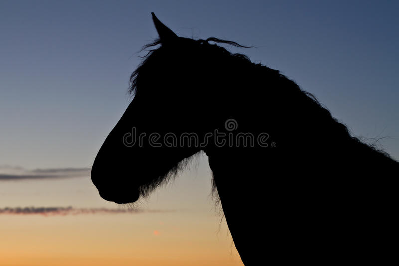 Silhouette of horses stock photo