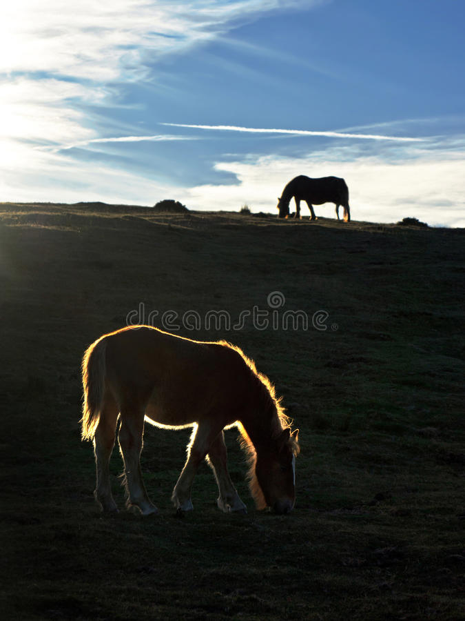 Silhouette of horses at sunset royalty free stock image