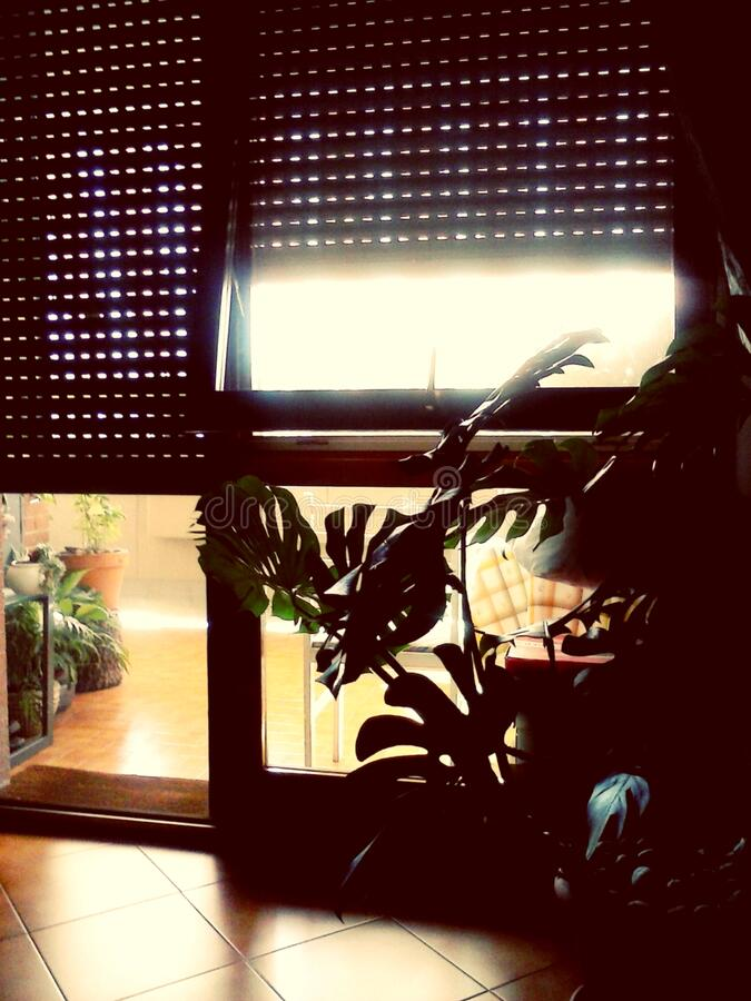 Silhouette of houseplants in sunny window stock images