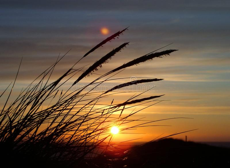 Silhouette Image of Fountain Grass during Sunset in Close Up Photography stock photos