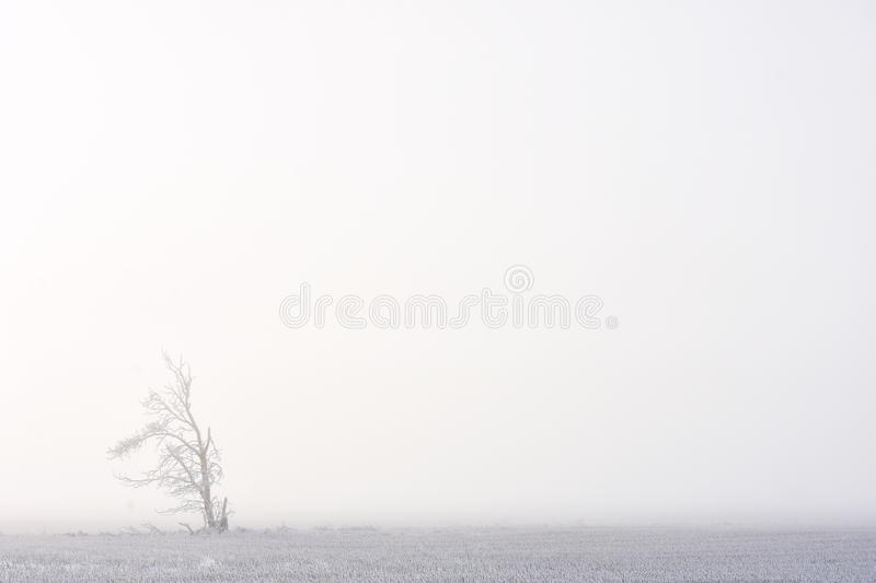 Lonely Tree Silhouette royalty free stock images