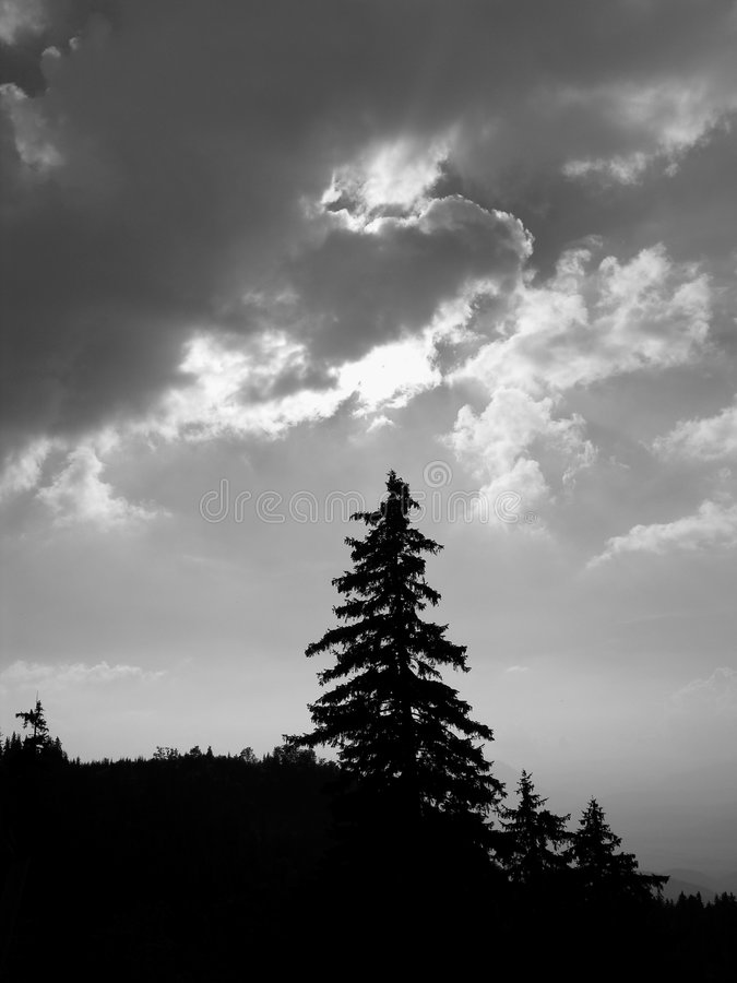Silhouette isolée d'arbre images libres de droits