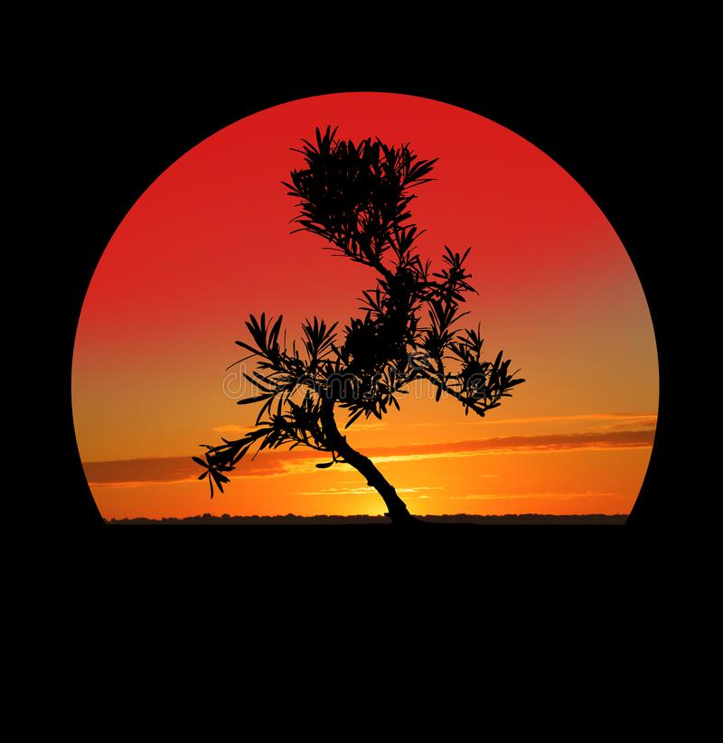 Silhouette of Japanese bonsai plant against sky at sunset. Creating zen atmosphere. At home royalty free stock image