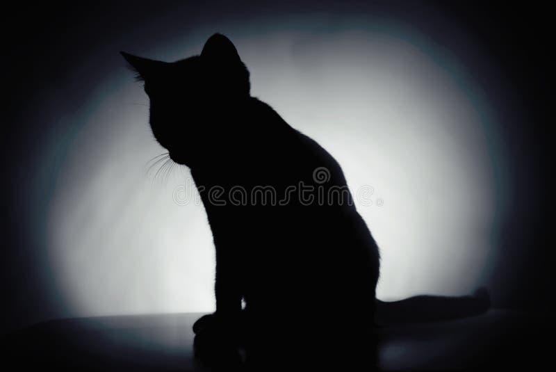 Silhouette of a kitten stock photo