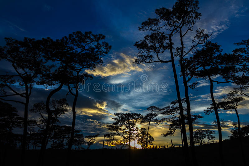 Silhouette landscape with pine forest at Phu Soi Dao national park, Thailand stock photo