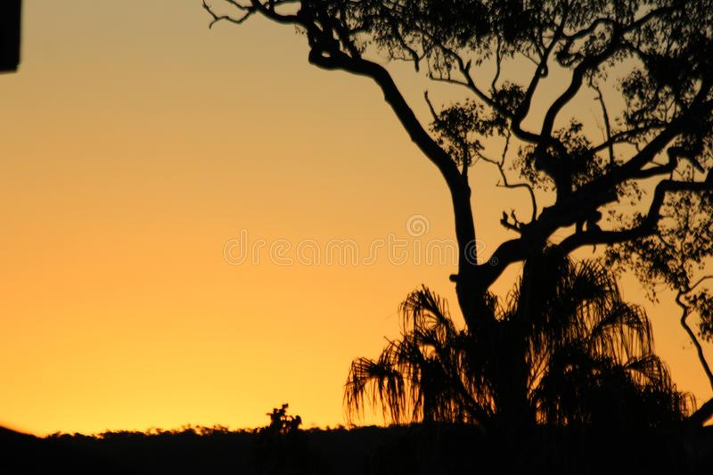 Silhouette of Large Tree royalty free stock photos