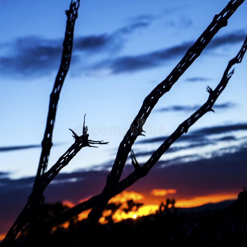 The silhouette of the lattice skeleton of a dead cholla cactus in the desert southwest. Against the blues and oranges of a Santa Fe sunset in New Mexico stock photos