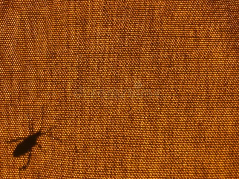 Silhouette of a leaf leg bug or beetle on a orange canvas stock photo