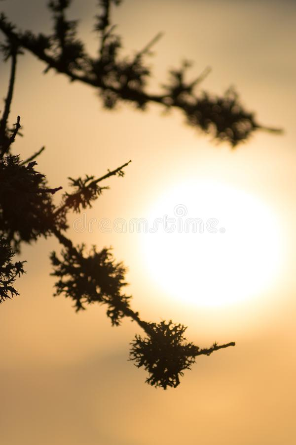 Silhouette leaf shapes in sunset. Symbolizing hope and tranquility royalty free stock photos